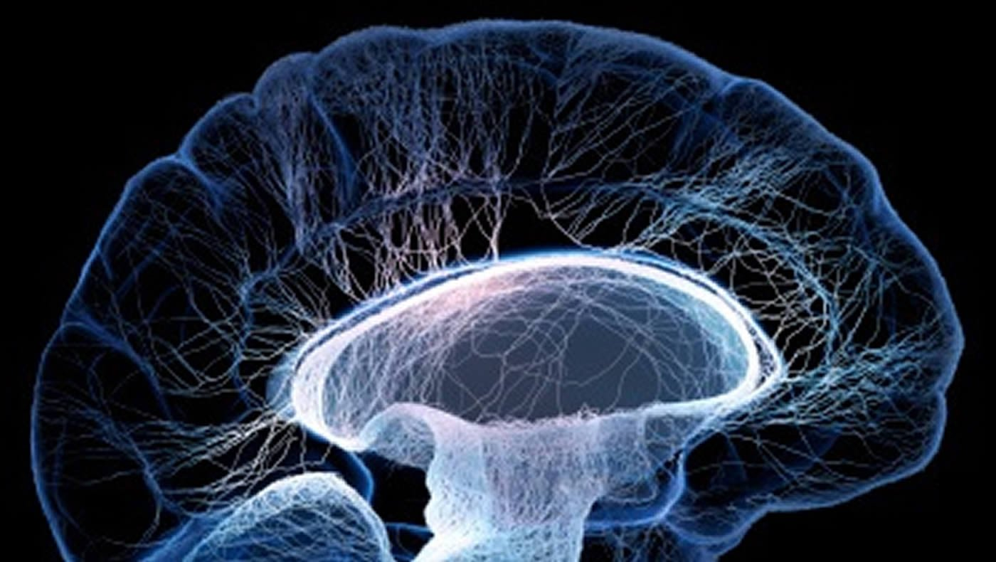 This image shows a neurons in the brain.