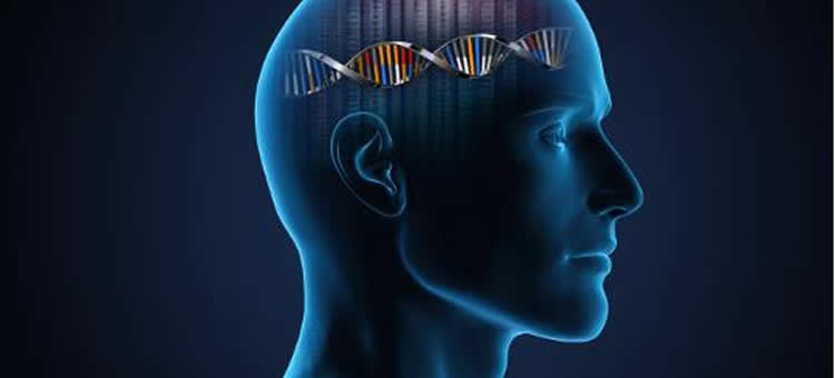 This image shows an outline of a head with a DNA double helix in it.