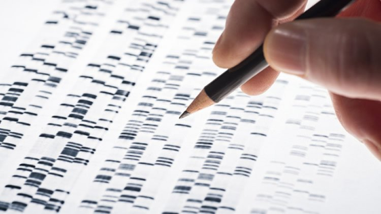 This shows a genetic print out.