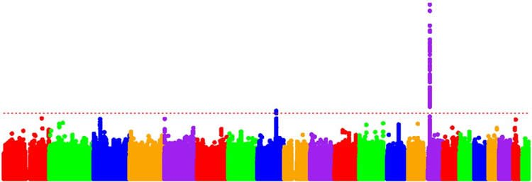 This shows a colorful bar graph.