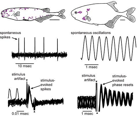 The image shows a drawing of a fish and graphs from the study.
