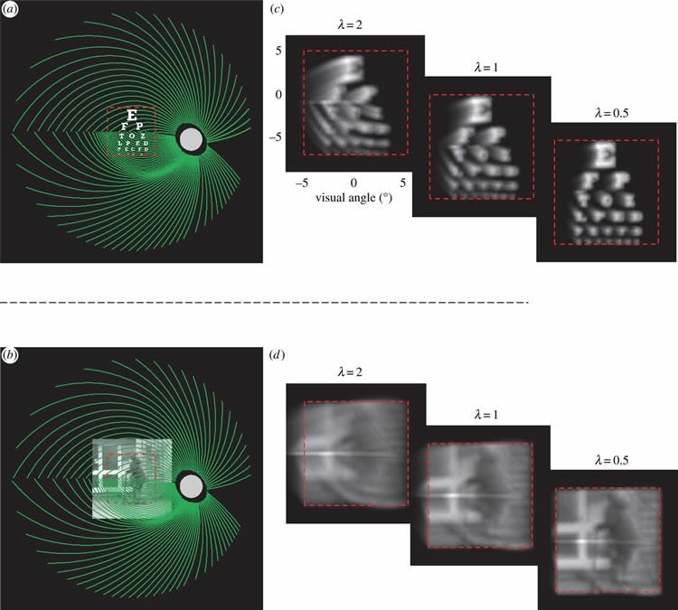This shows how the visual distortions may look through a bionic eye.