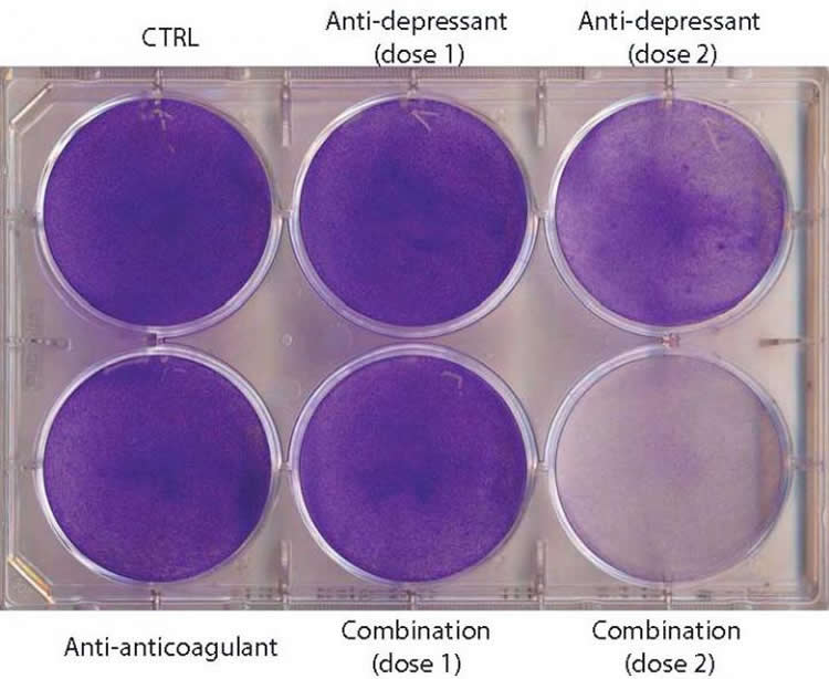 Nine petri dishes with crystal violet staining for live cells.