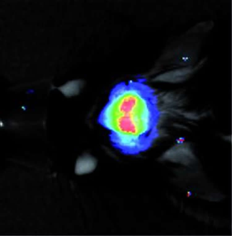 Image shows the light can be measured through the skull.