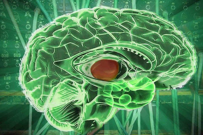 This is a drawing of a brain.