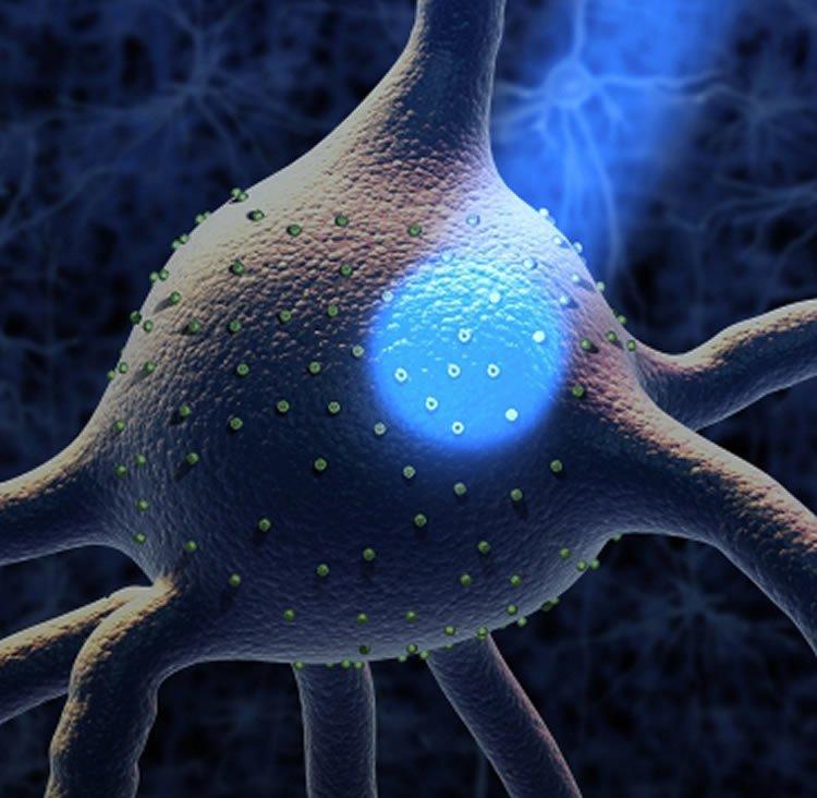 Image shows a light beam shining onto a neuron.
