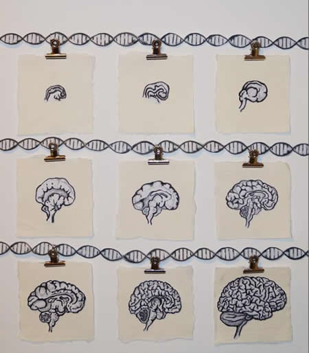 This image shows drawings of different areas of the brain and a dna double helix.