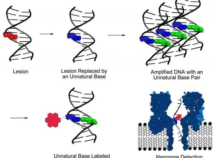 Diagram shows how the new method detects DNA damage that leads to neurological diseases.