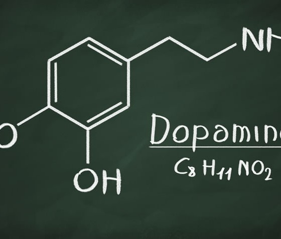 The Role of Dopamine in Motivation and Learning ...