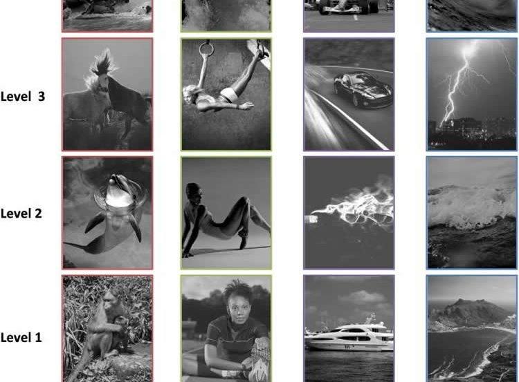 Photo stills ranging from sleeping puppies to crashing waves.