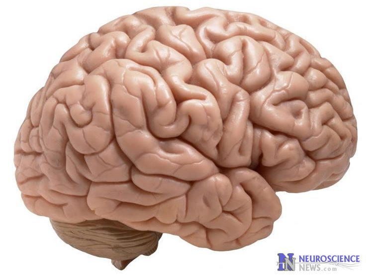 Photo of a brain.