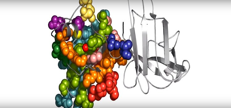Image shows molecular structure of proteins.