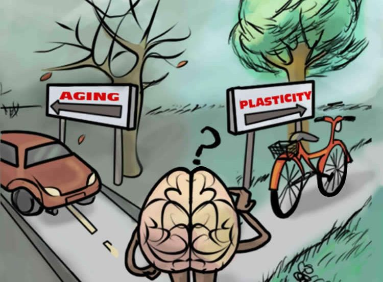 Drawing of a brain standing at a cross roads. One side of the road has a car and a sign that says Aging, the other a bike and a sign that says Plasticity.