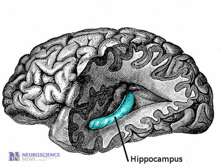Vitamins to improve memory loss