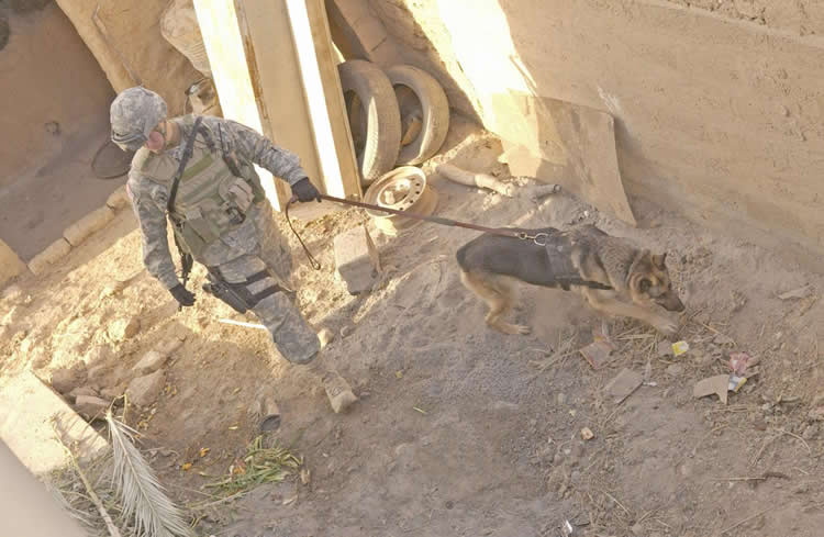 Image shows a soldier with a dog.