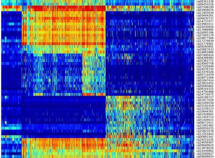 Image shows a DNA methylation heat map.