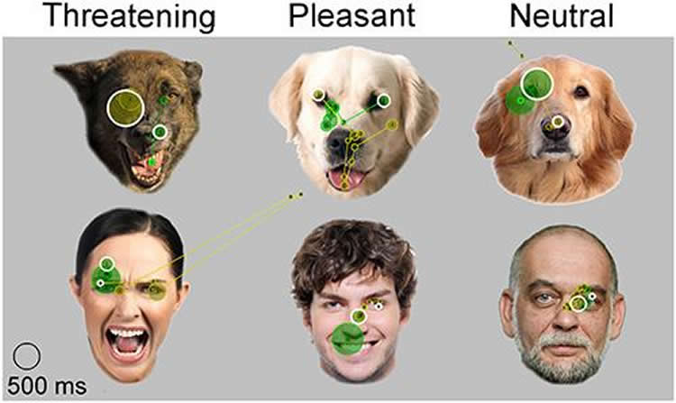 Image shows dogs and people with different facial expressions.