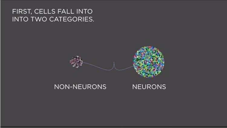 Image shows how cells fall into either the neuron or non-neuron categories.