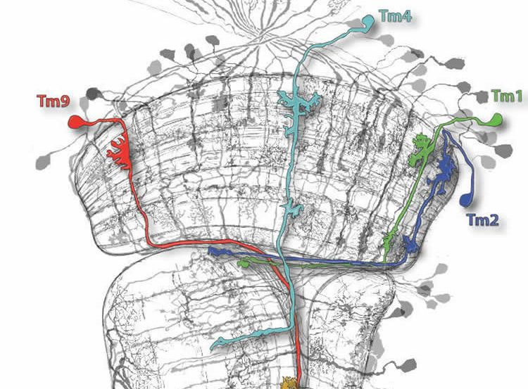 Image shows a network of the nerve cells.