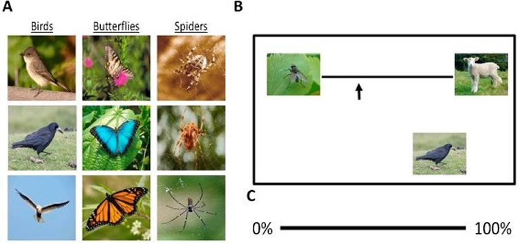Image shows spiders, butterflies and birds.