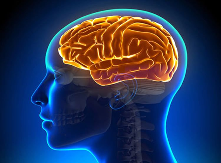 Image shows the outline of a head in blue and an orange brain.
