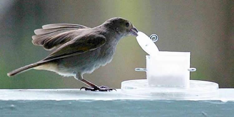 Image shows a Bullfinch.