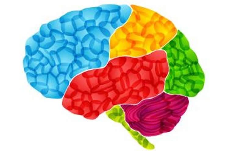 Image of a multi colored brain.