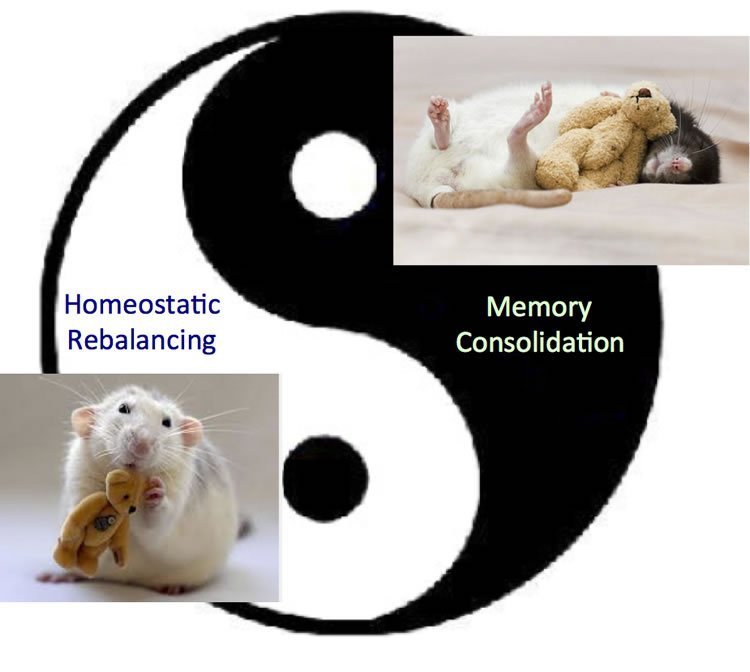 Image shows a mouse cudding a teddy bear and a Ying-Yang symbol.