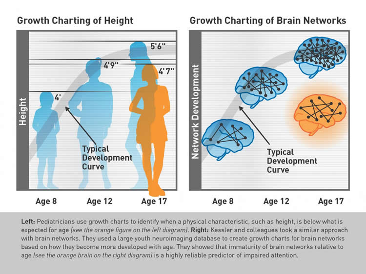 Brain 'Growth Chart' May Help Identify Attention Problems ...
