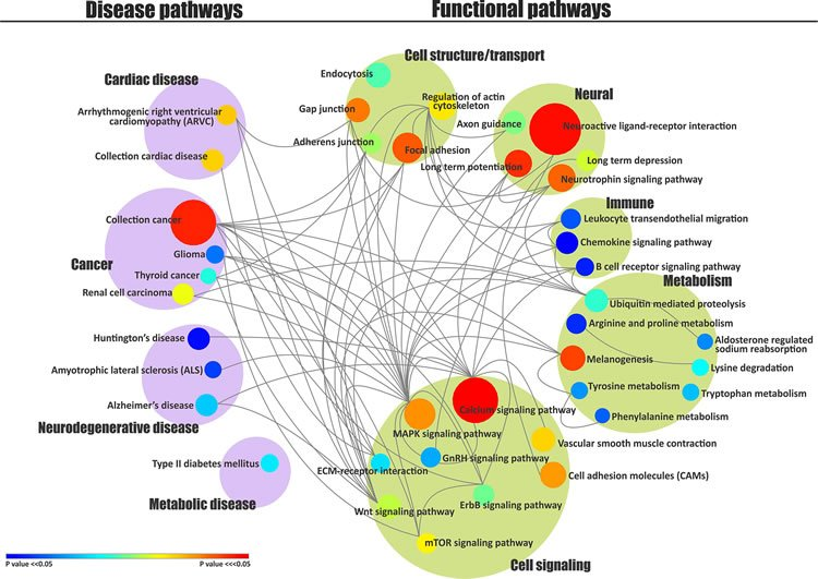 Image shows chart of disease and functional pathways.