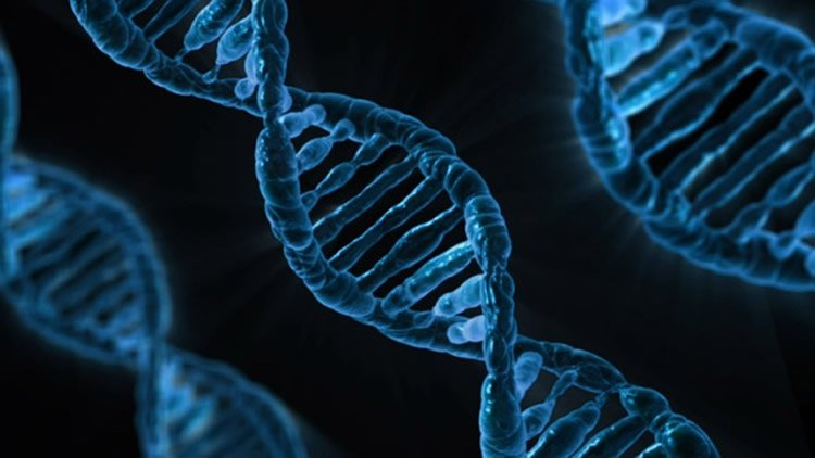 Image shows three DNA double helix.