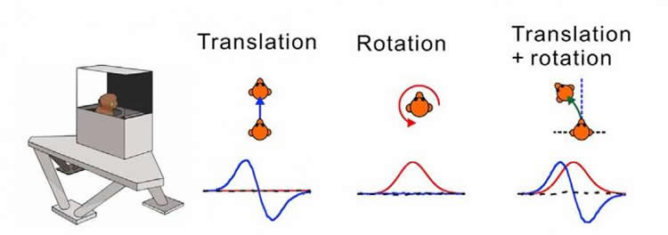 Image depicts the linear, rotational, and curved motion the macaques.