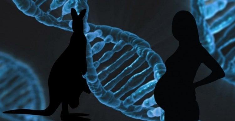 Image shows DNA, a pregnant woman and a kangaroo.