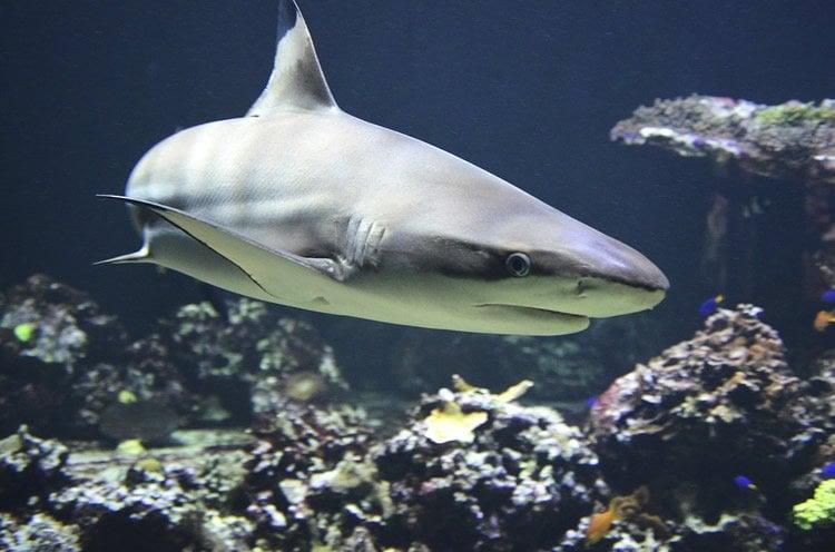Image shows a shark.