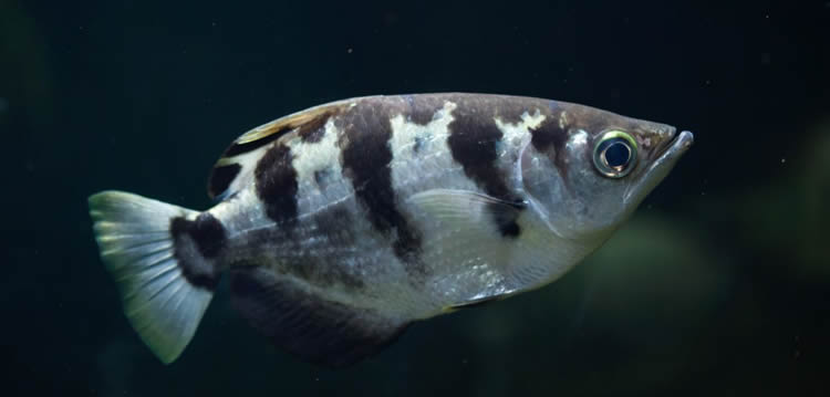 Image shows a fish.