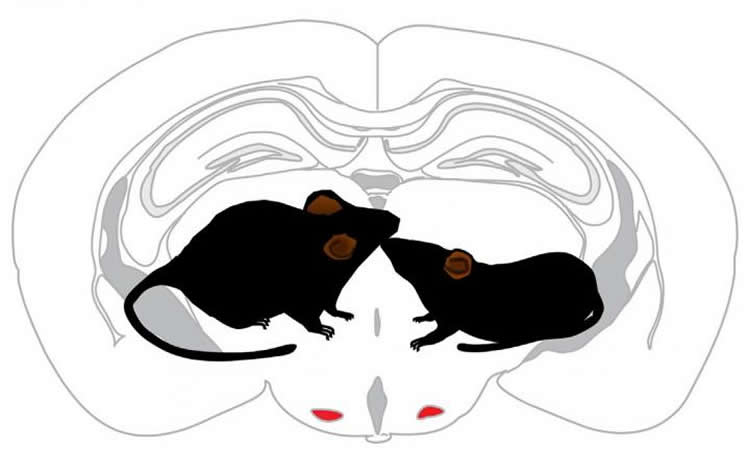 Image shows a drawing of mice and a brain.
