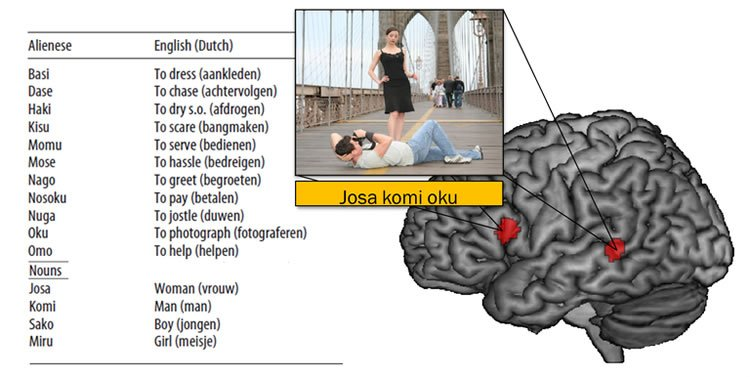 Image shows a list of words and a brain.
