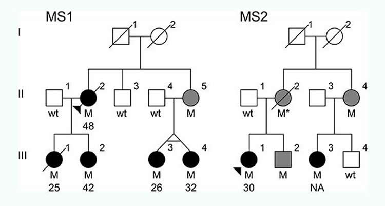Image shows a genetic family tree.