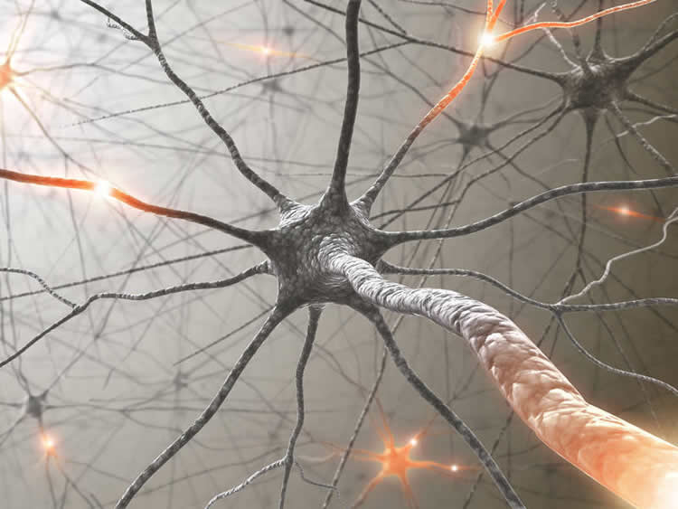 Four New Risk Genes For Multiple Sclerosis Discovered