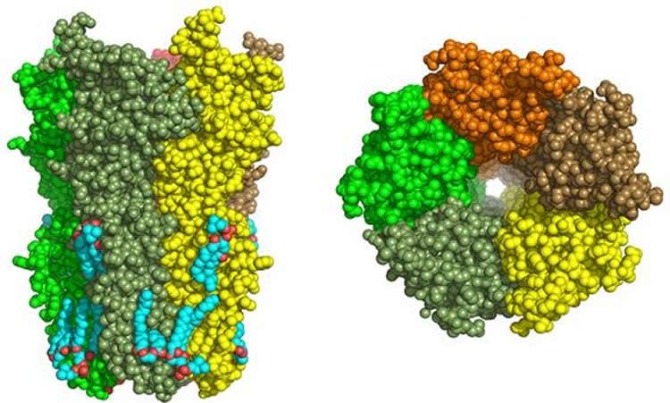 Image shows a nicotic receptors.