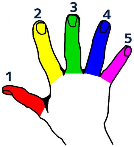 Image shows a hand with fingers colored different colors.