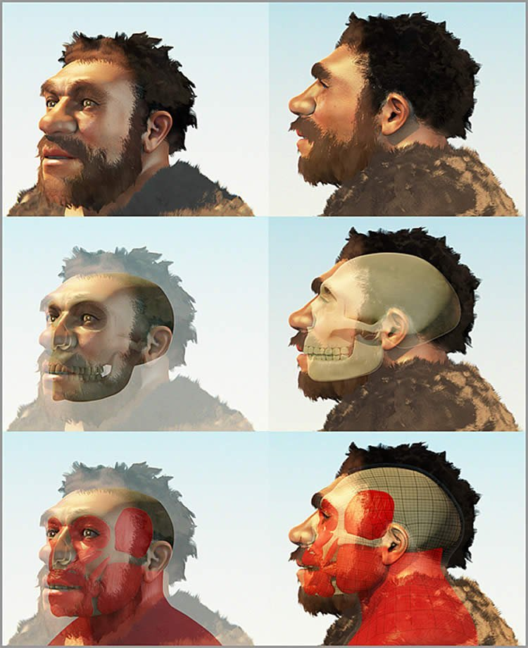 Image shows a forensic reconstruction of a Homo neanderthalensis.