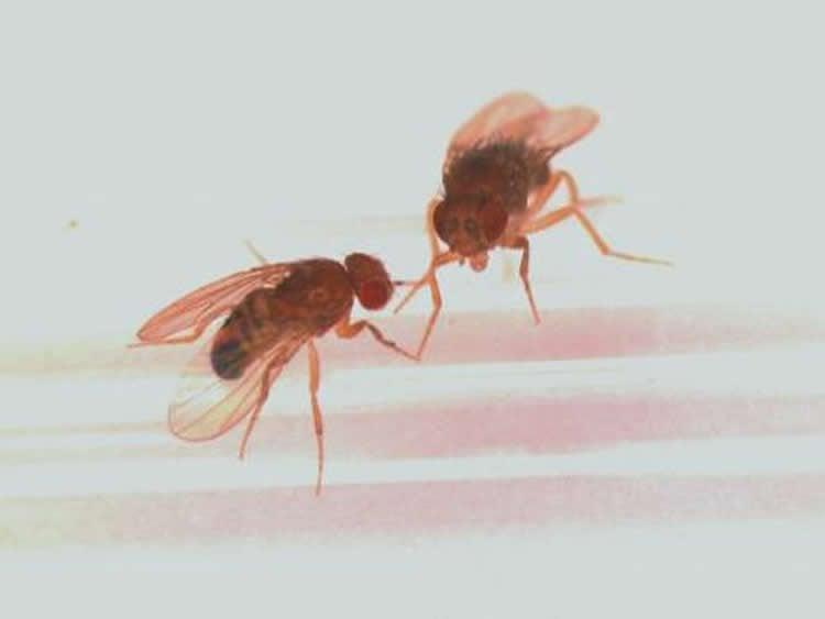 Image shows flies.