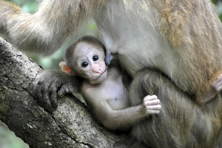 Image shows a baby monkey.