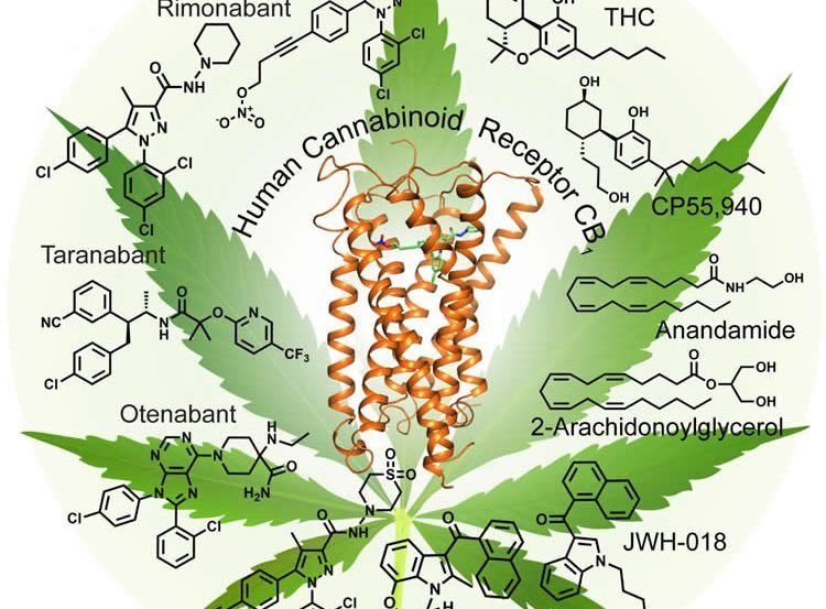 Image shows a marijuana leaf and chemical structures.