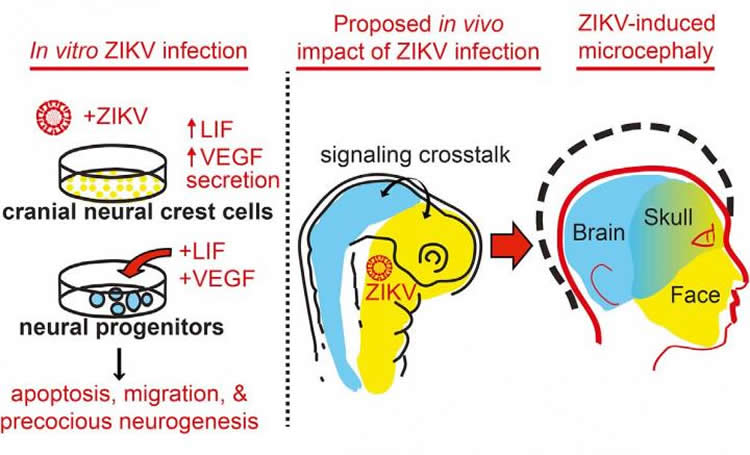 Image shows visual abstract from the study.