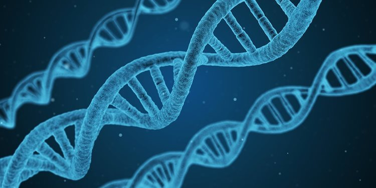 Image shows 3 DNA double helixes.