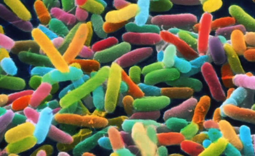 Image shows rainbow colored bacteria.