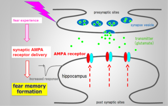 Fear conditioning data on image of synapse is shown.