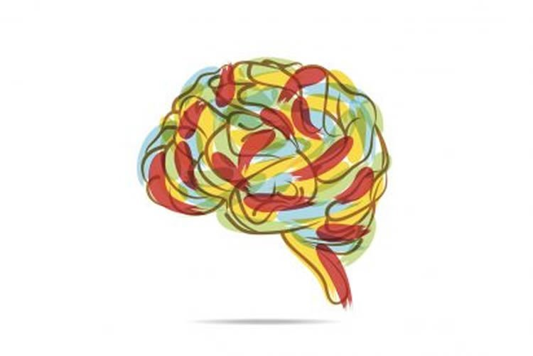 Image shows a drawing of a brain.
